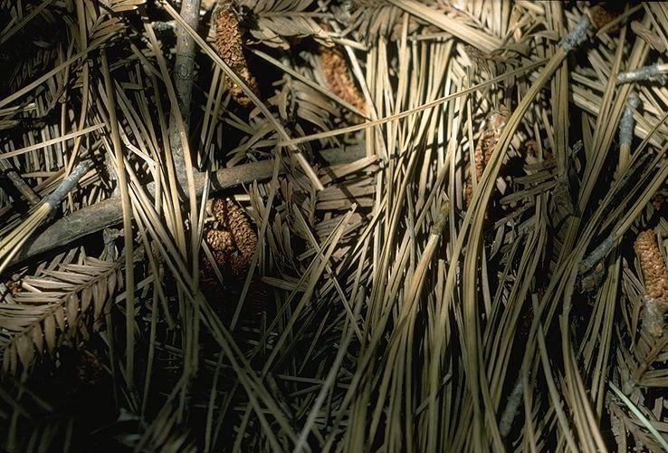 Forest Floor in Davis California