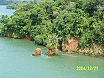 [Small isolated island in Lake Gatun [Really a mountain-top]]